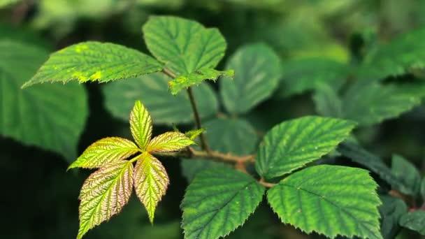 listí v lese