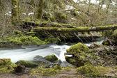 fiume selvaggio