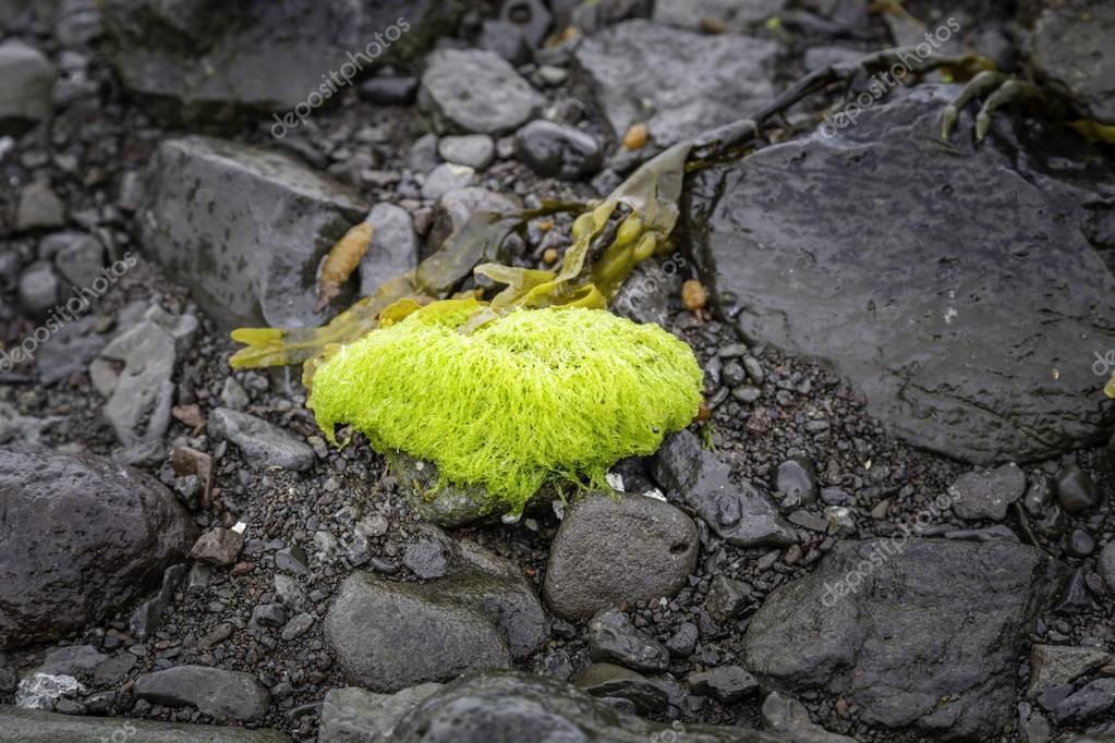 Vibrant Seaweed
