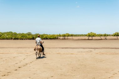 Locals using a donkey for transport in Lamu Island, Kenya