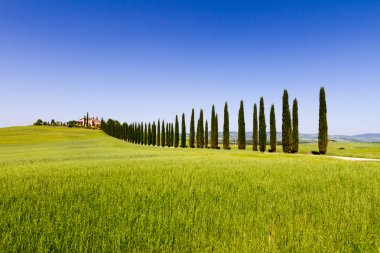 Country road flanked with cypresses near San Quirico d'Orcia in Tuscany, Italy stock vector