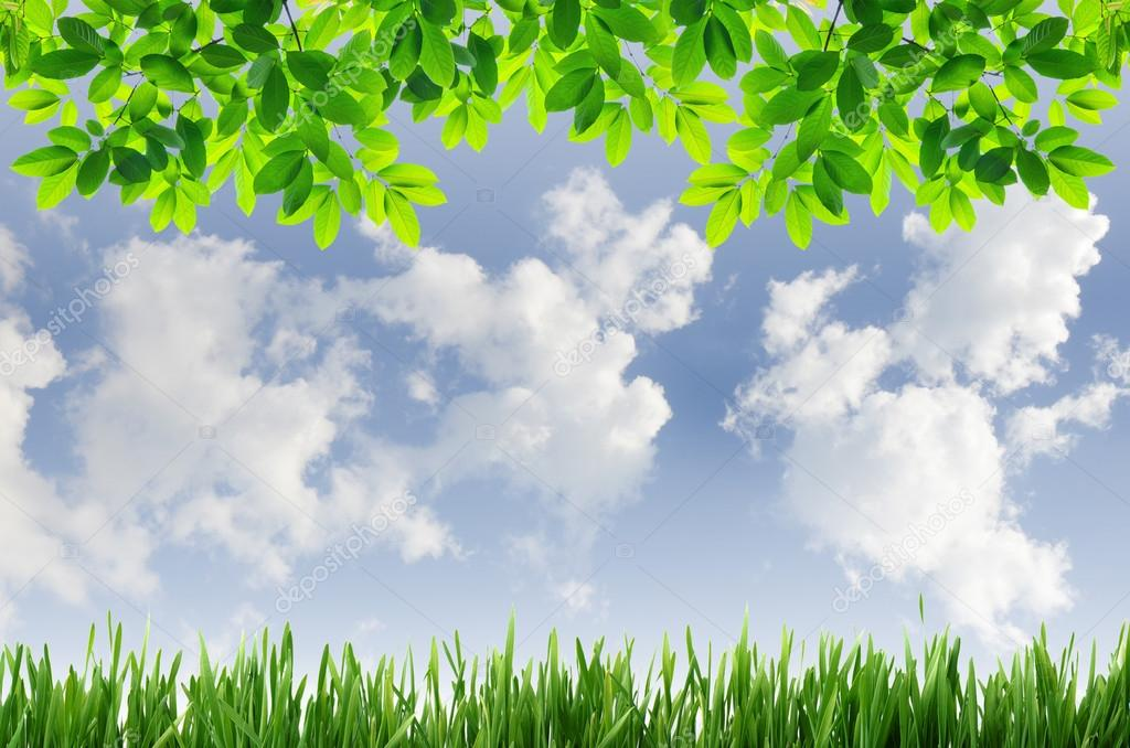 green grass and green leaves with blue sky background