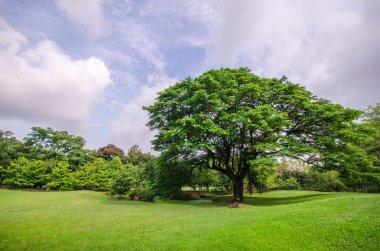 Big tree on green grass field