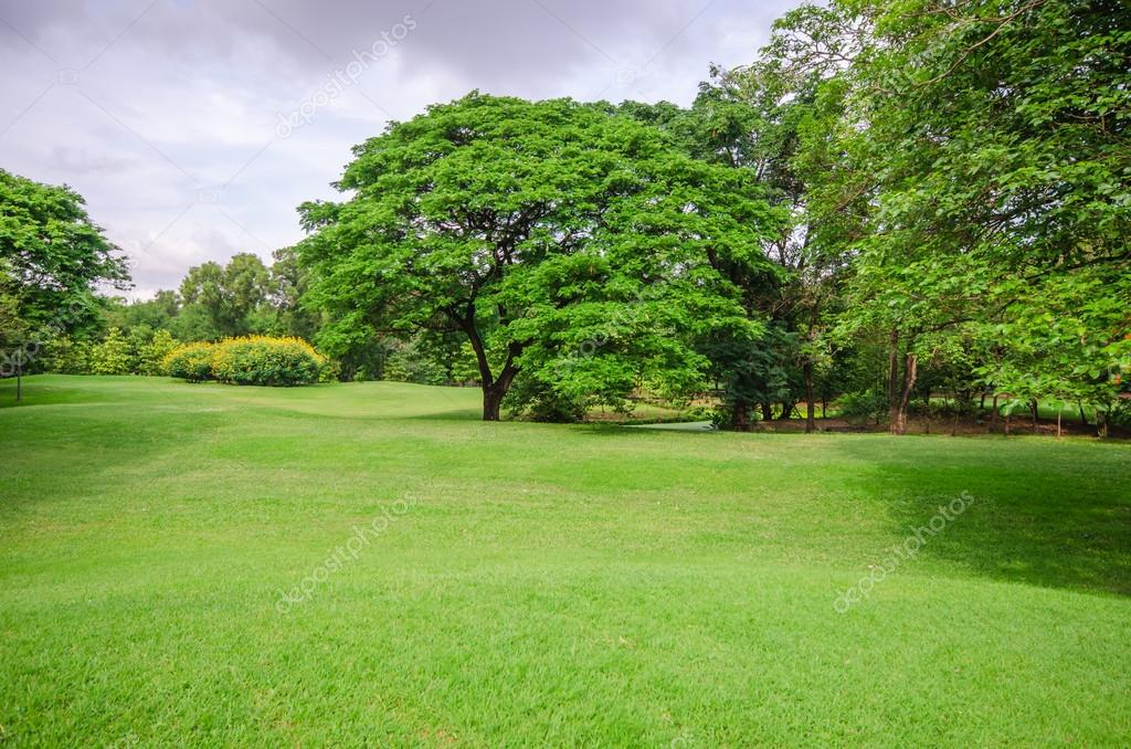 Big tree on green grass field