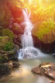 Dunkelforst schöner Wasserfall in Nakornnayok, Thailand