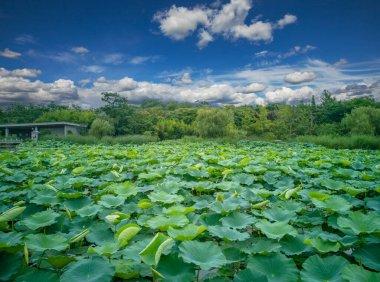 Xuzhou city,Jiangsu province,Han culture scenic area,Chu king tomb Han tomb.