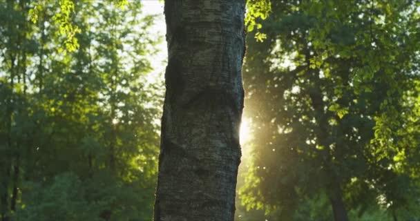 Osvětlení trávou v paprscích zapadajícího slunce