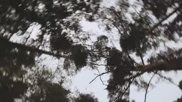 Větve stromů krouží pohled zdola