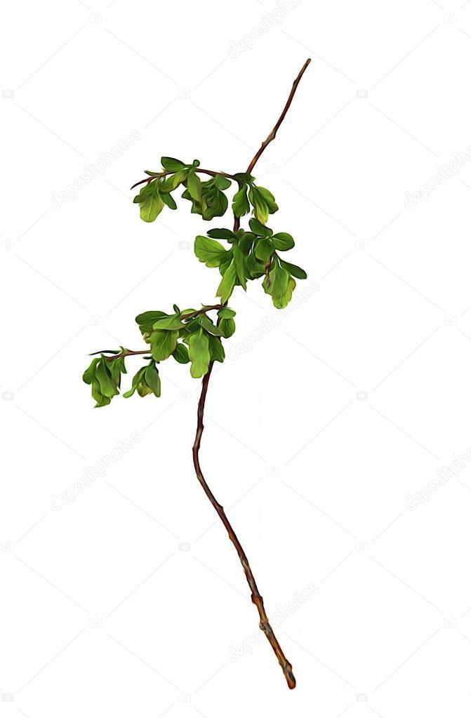 Yağlı Boya Kuru Sonbahar Yaprak Genç Yeşil Dal Ahududu çalı