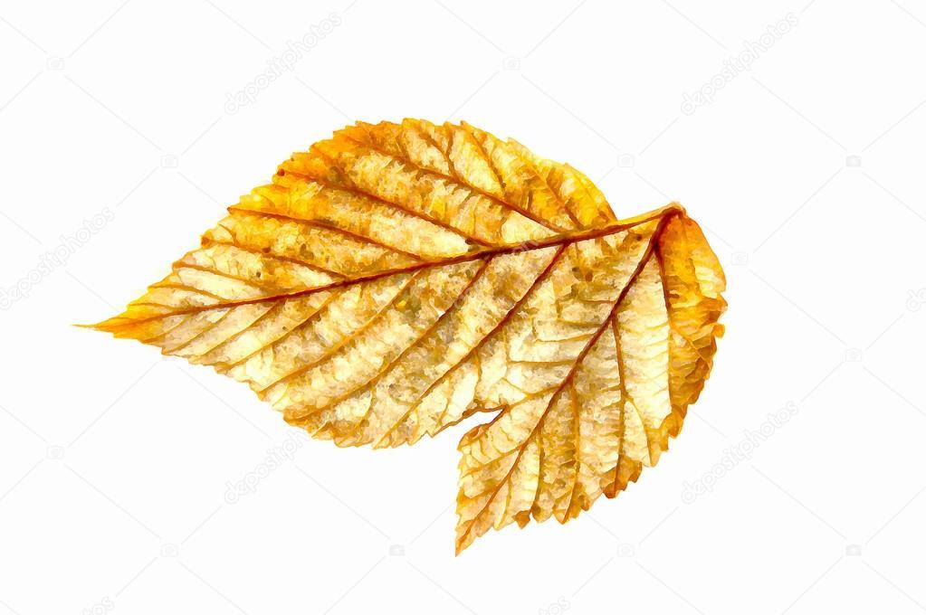Boya Kuru Sonbahar Gümüş Yaprak Ahududu Elemanları Stok Foto
