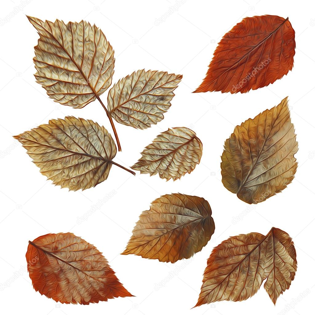 Paint Dry Fall Silver Leaf Of Raspberry Elements Stock Photo