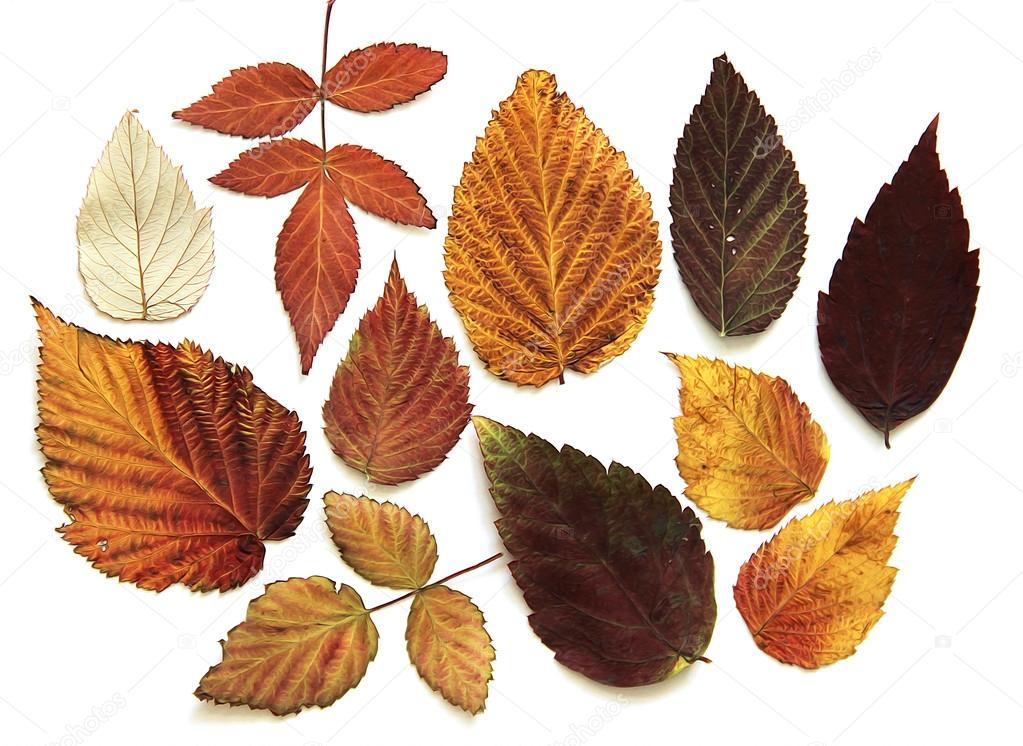Yağlı Boya Kuru Ahududu Parlak Renkler Sonbahar Yaprak Stok Foto