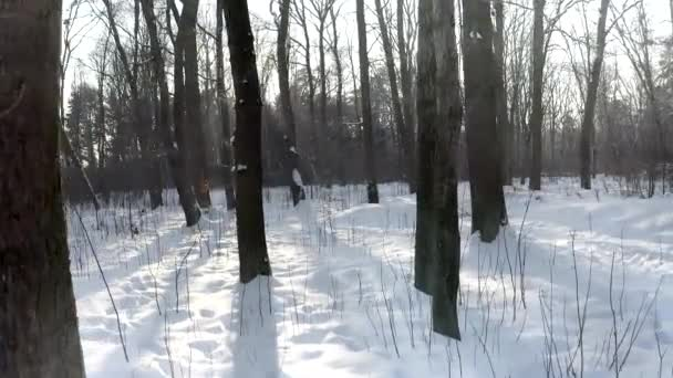 Letectví: Krásný les v zimě