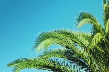 Summer background with Palm tree against sky.