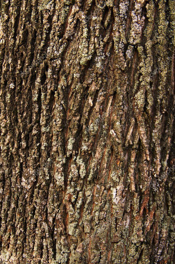 Invoice of bark of a tree