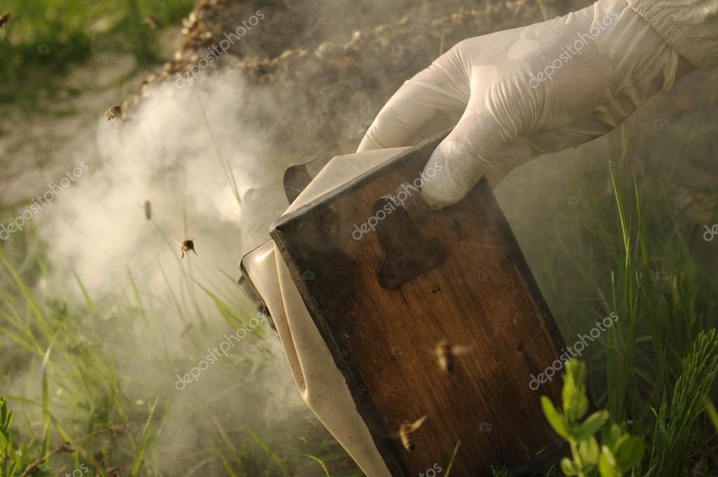 Smoker and bee
