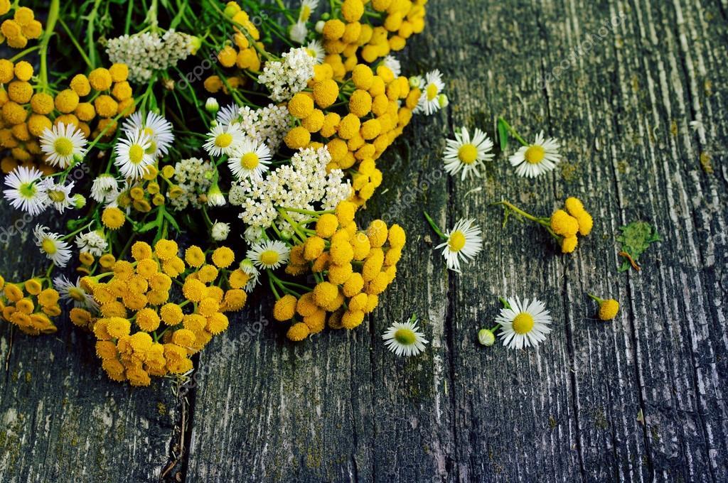 Flores Sobre Un Fondo Vieja Madera De Verano Flores Medicinales De