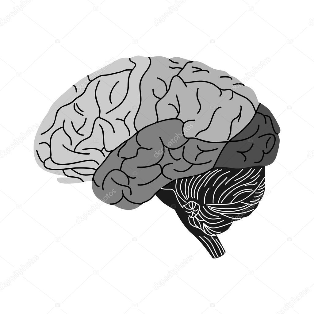 Gehirn schwarz — Stockvektor © Caribia #78509110