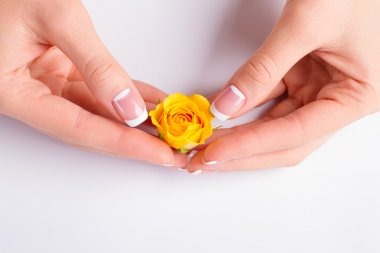 Hands with french manicure holding yellow rose.
