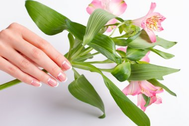 Hand with manicure holds a delicate branch of freesia.