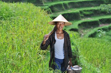 Traditional organic rice farmer