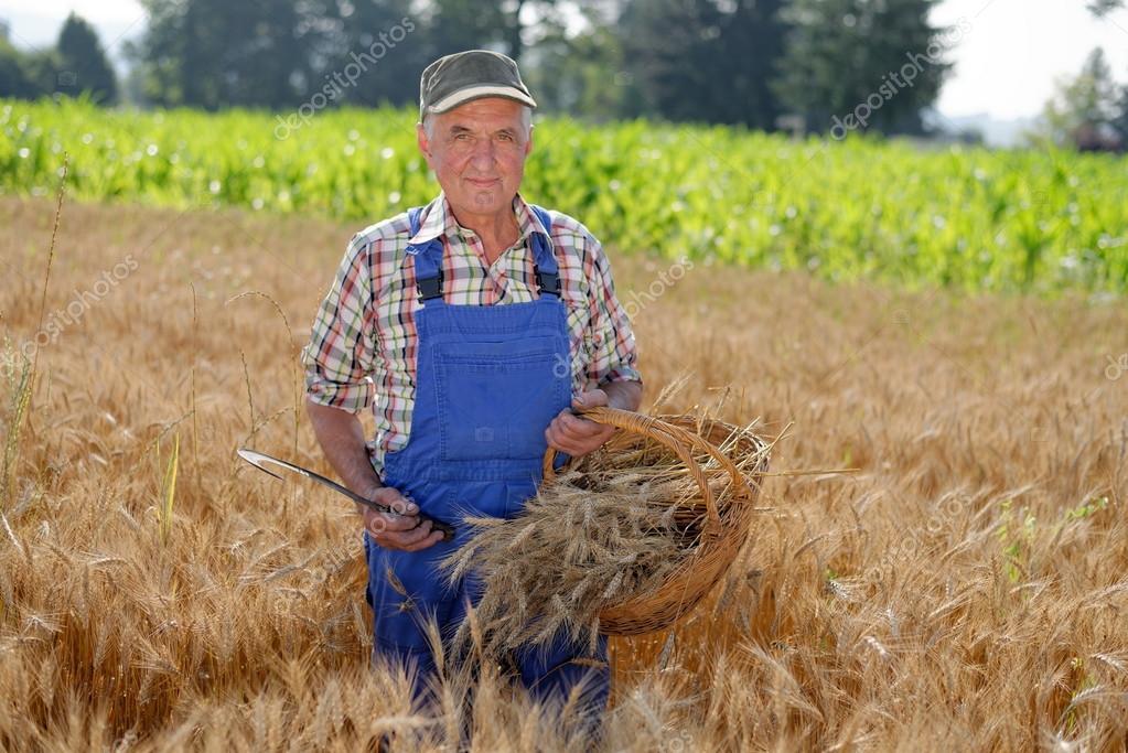Contadino in piedi in un campo di grano foto stock for Piani di fattoria di 2000 piedi quadrati
