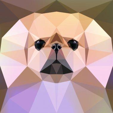 Face of a Pekingese dog. Vector illustration.