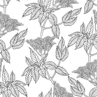 Linear elderberry plant