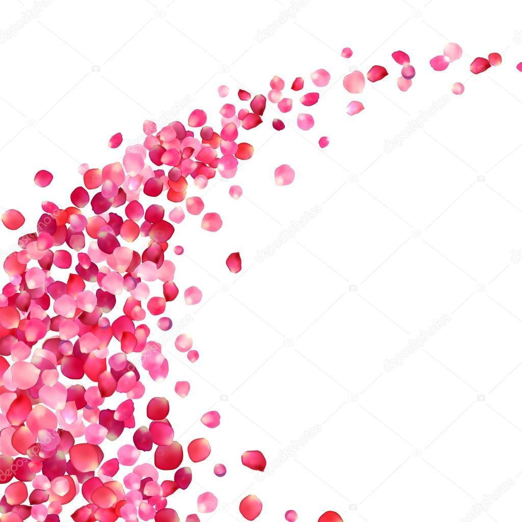 Fond blanc avec tourbillon de p tales de roses rose image vectorielle ukususha 66792195 - Petale de rose comestible ...