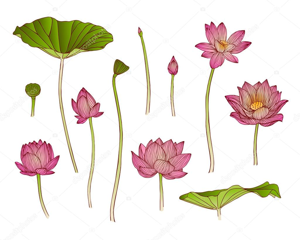 Lotus flower stock vector ukususha 79939634 lotus flower stock vector izmirmasajfo