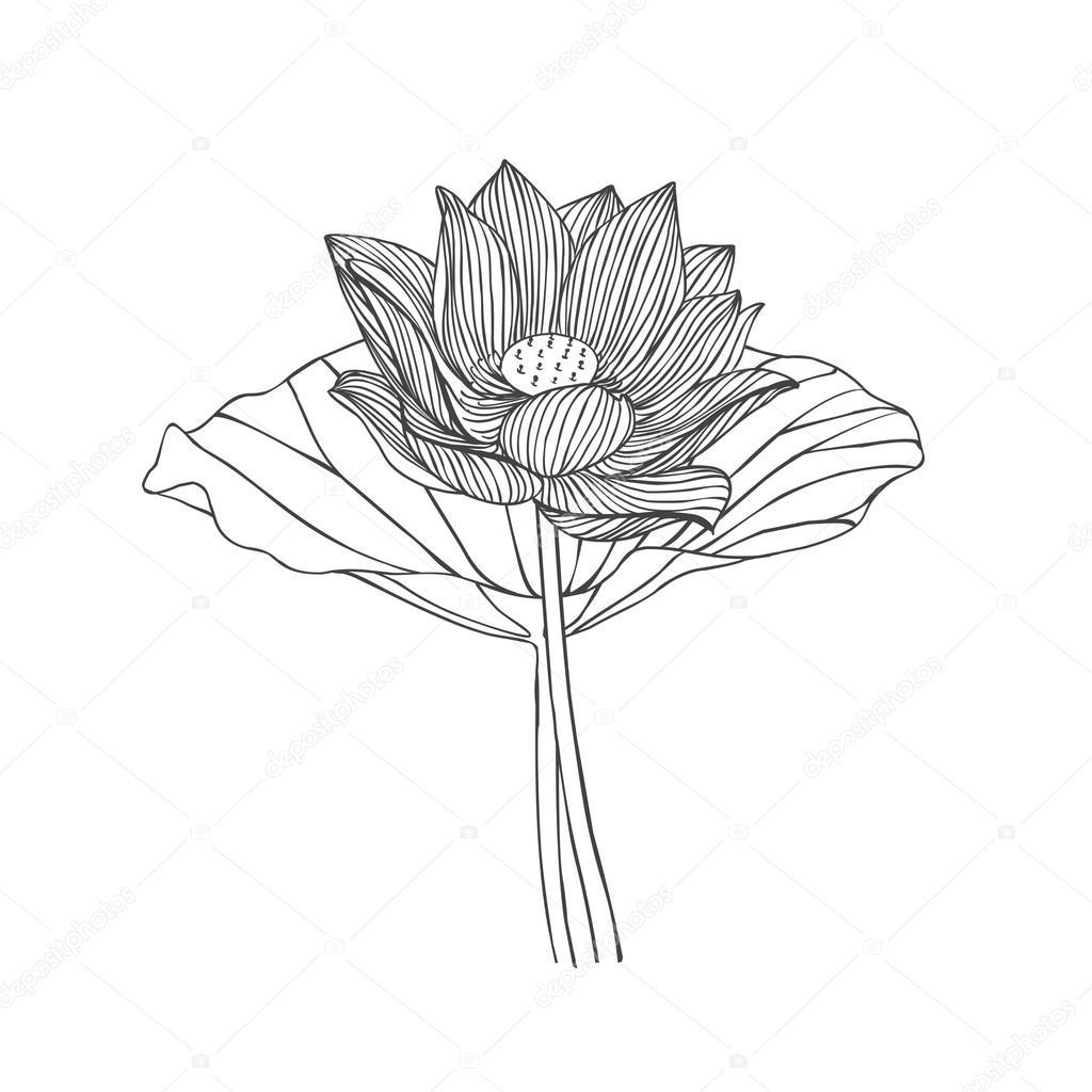 Engraving hand drawn illustration of lotus flower stock vector engraving hand drawn illustration of lotus flower stock vector izmirmasajfo