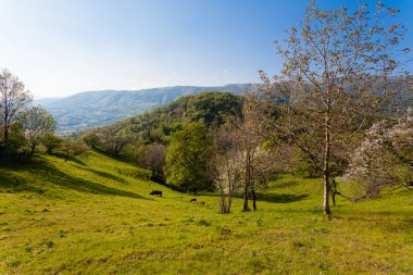 Hills panorama