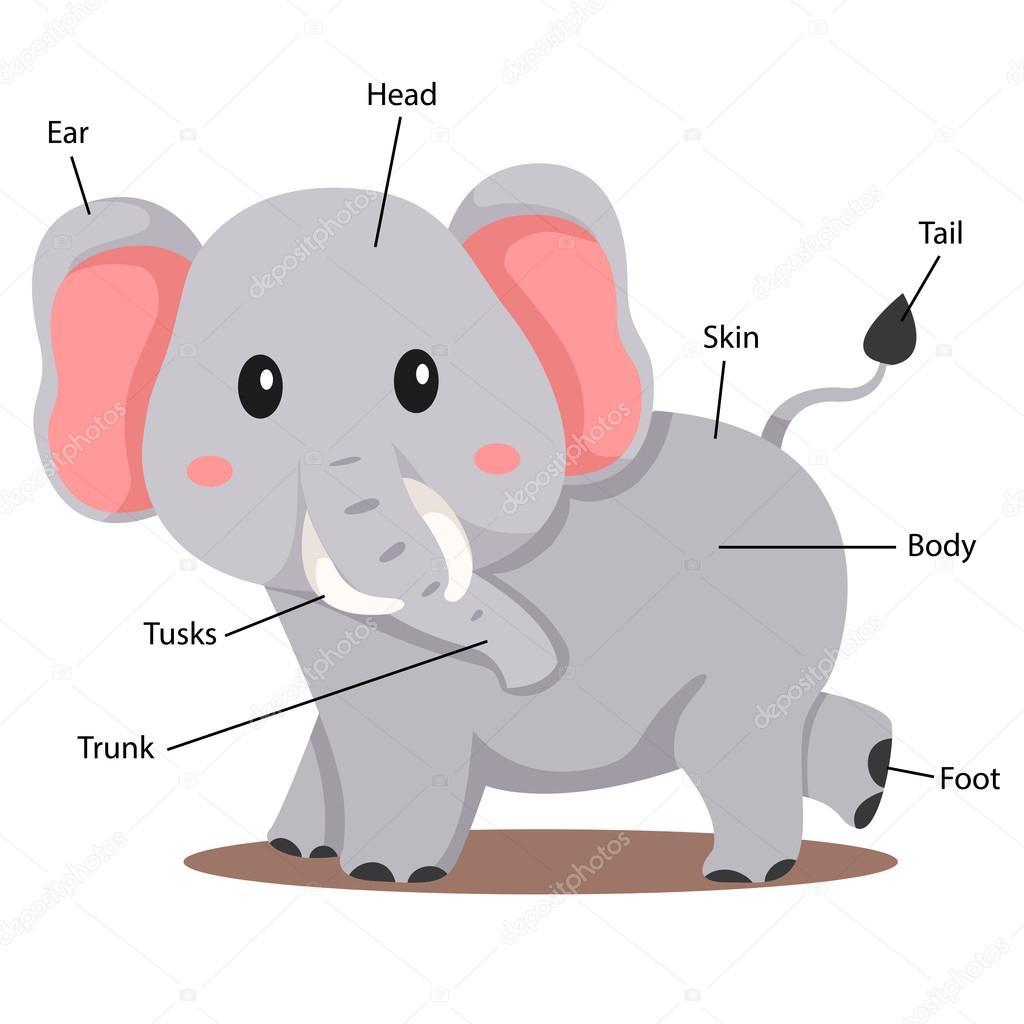 Ilustrador de parte del cuerpo del elefante — Archivo Imágenes ...