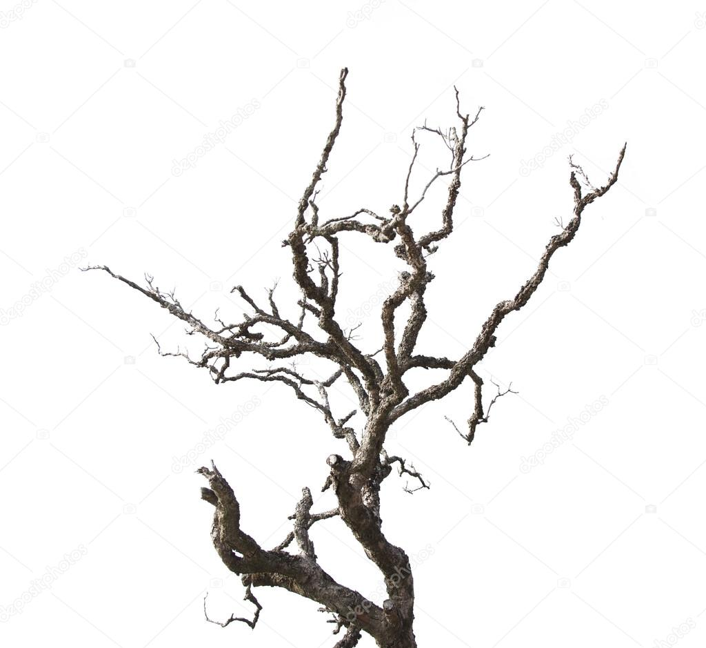 Dead branches isolated on white background