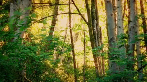 Zlaté slunce ve večerních hodinách Woodland