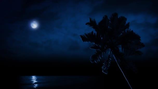 Palma po moři osvětluje Moonlight