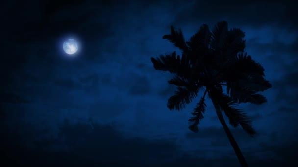 Palma v Breeze s měsíce