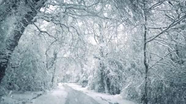 Sníh padá na silnici lesem