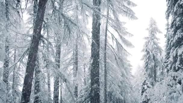 Schnee fällt im Winterwald