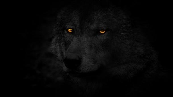 Vlk s ohnivýma očima boční pohled ve tmě