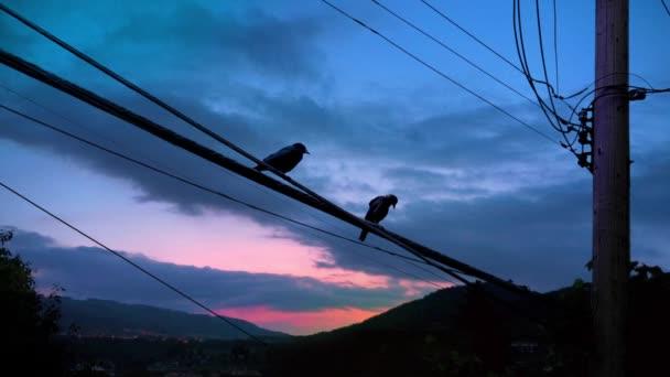 Paar Vögel fliegen — Stockvideo © RockfordMedia #61372727