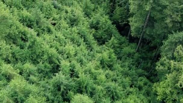 Letu nad zalesněné stráně