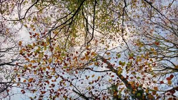 Režijní stromy s barevnými listy
