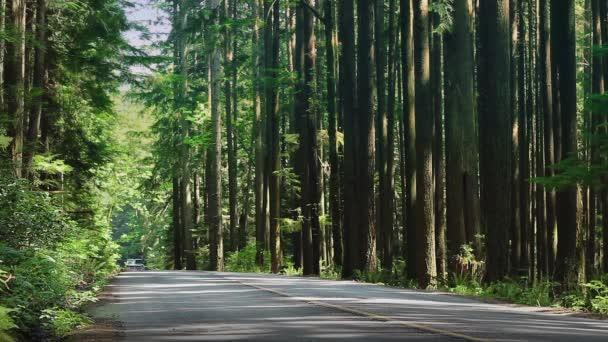 Náklaďák na lesní cestě