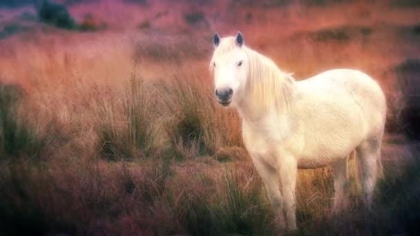 Kouzelný kůň ve snu