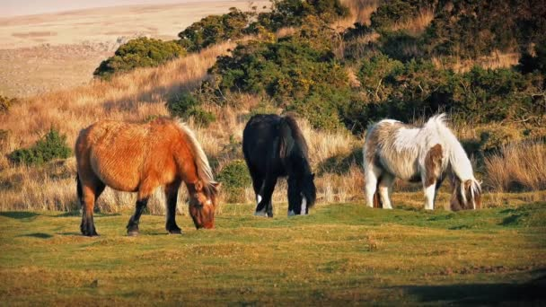 Brown Black And White Horses Grazing