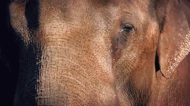 Sloní obličej