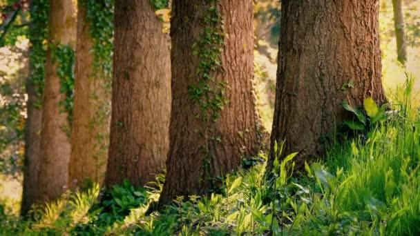 Kmeny stromů v klidné letní Woodland