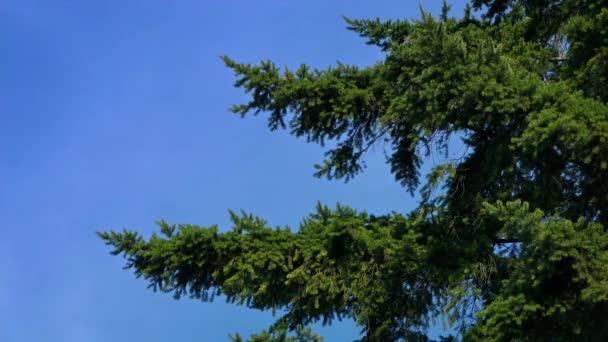 Větve v jemném vánku
