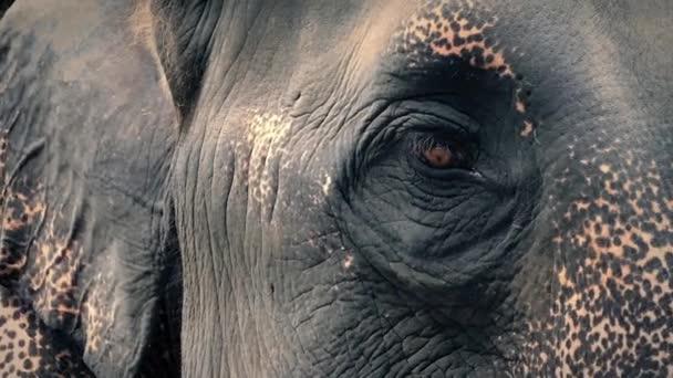 Elefánt szemmel nézett körül a Vértes